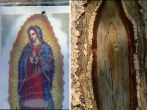 Our Lady Of Guadalupe; Virgin Mary Tree (credit: CBS 2, NYC)